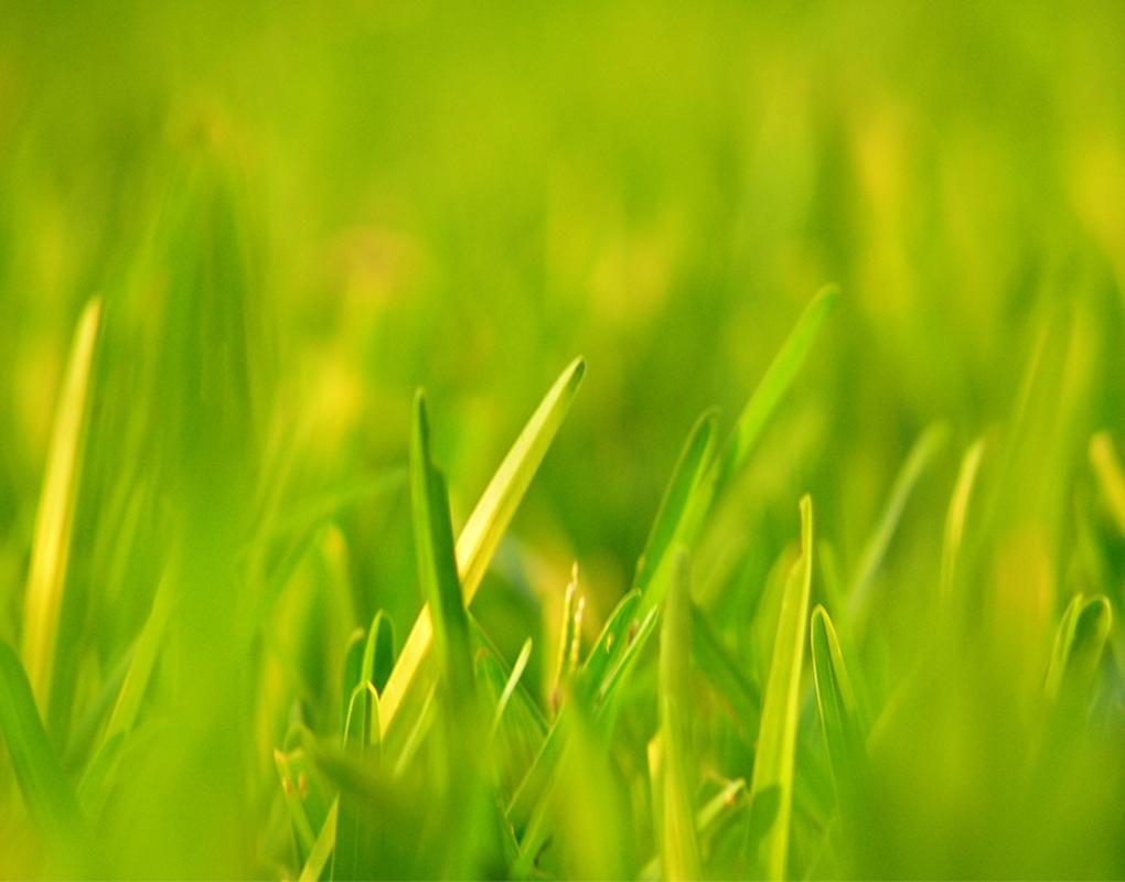 Simple grass! by Nichott Leon