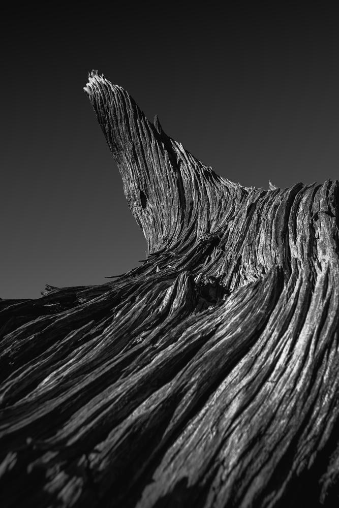 Wood Flow by Joe Scalise