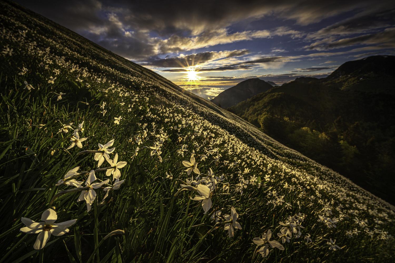 White meadows by Piotr Skrzypiec