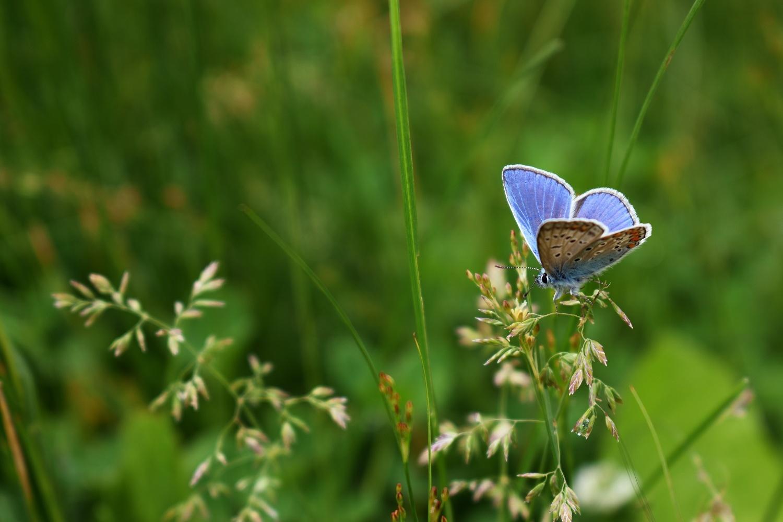 Beautiful butterfly by Vlad Stetsenko