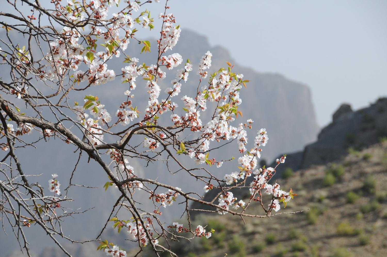 Jabal Akhdar by Gerald Kovex
