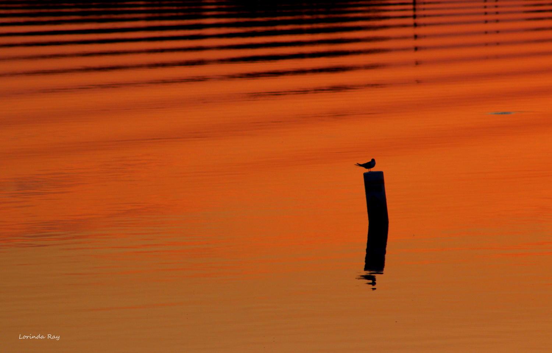 Sunset Ripples by Lorinda Ray