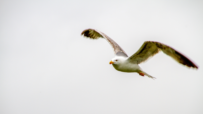 seagull by Angel Grueiro