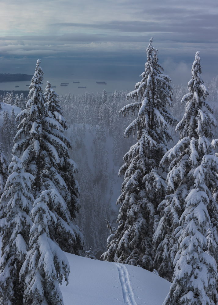 Ski tracks disappearing over a snowbank in the trees overlooking mountain forest by Greg Rosenke