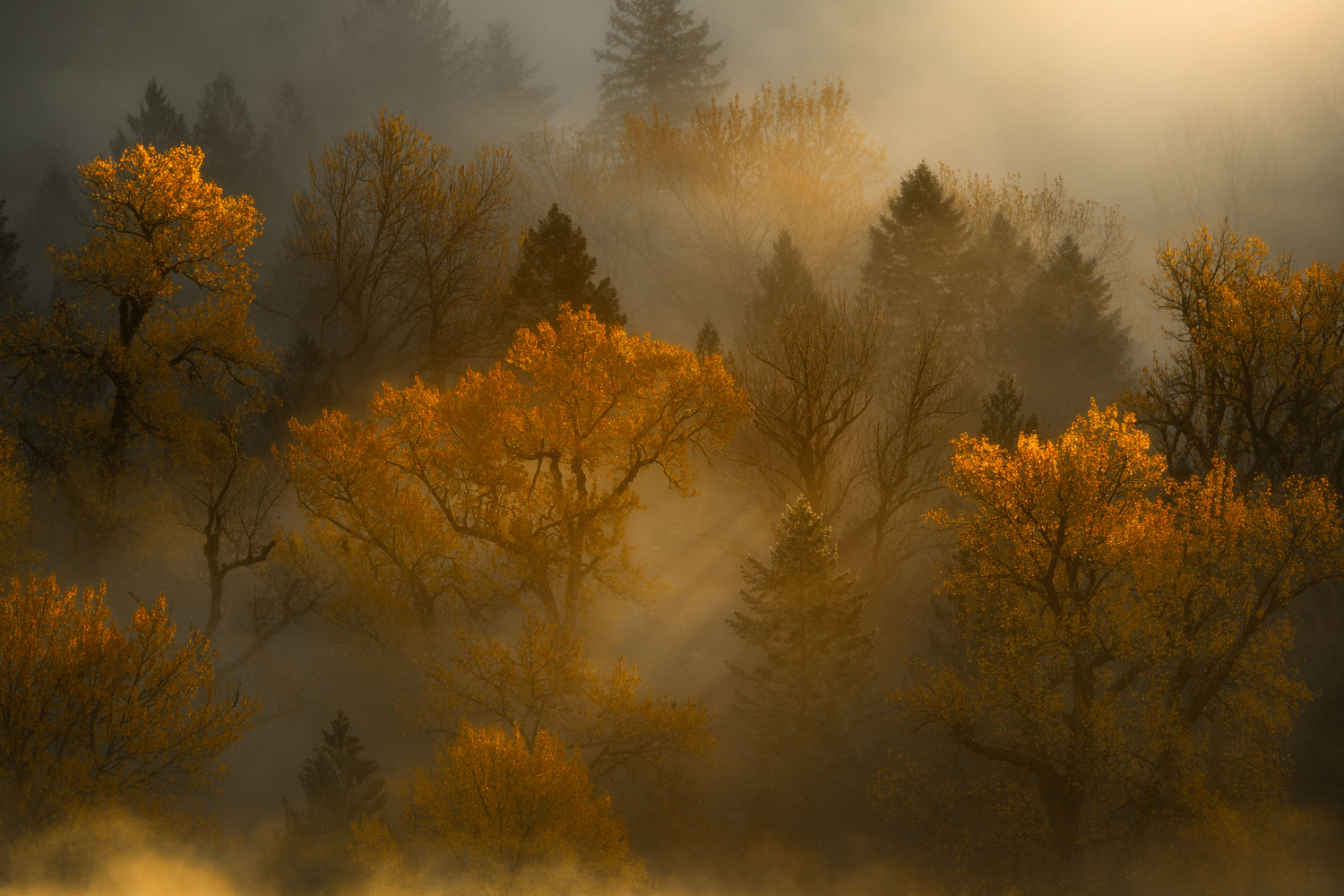 Trees of Gold by John Byrn