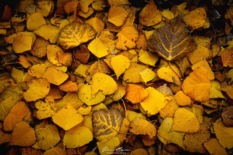 Leaves of Fall by John Byrn