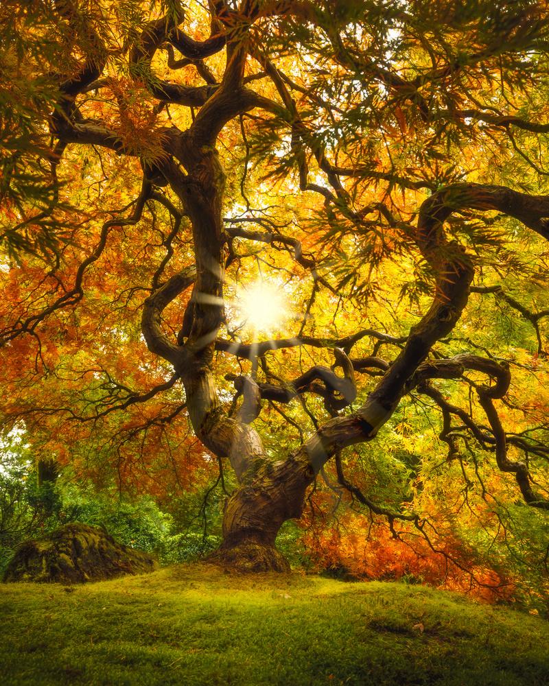 The Tree by John Byrn