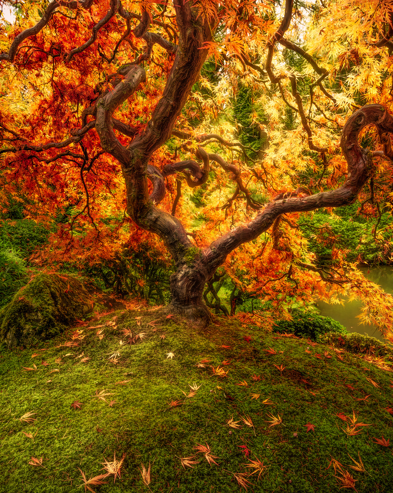 Colors of Fall in the Japanese Garden by John Byrn
