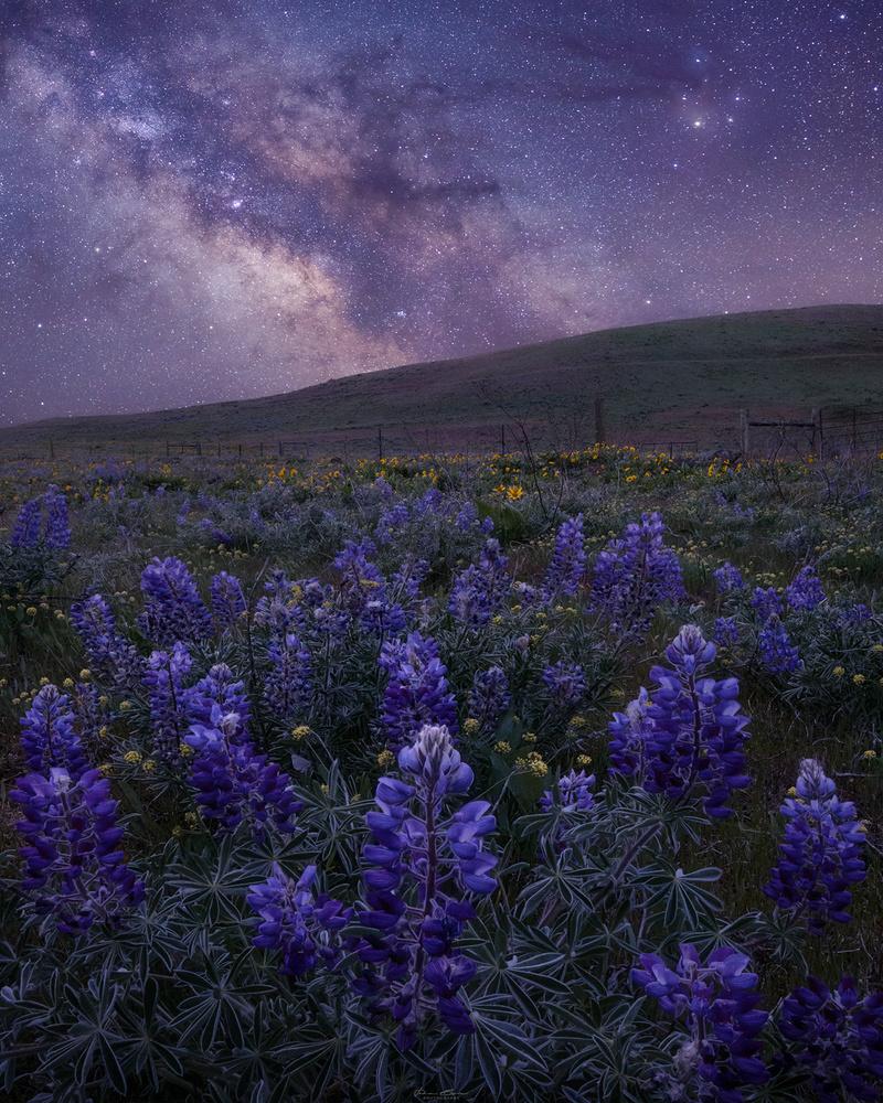 Spring Nights by John Byrn