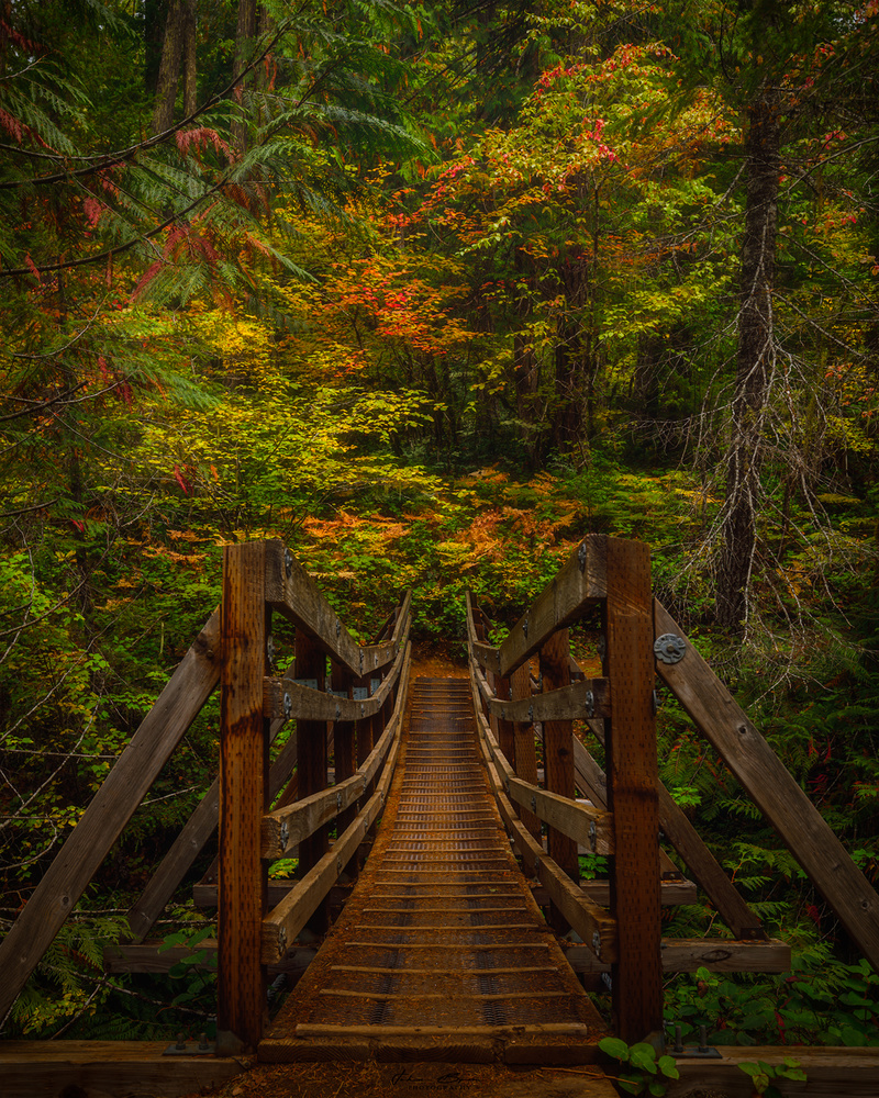 Bridge to Fall by John Byrn