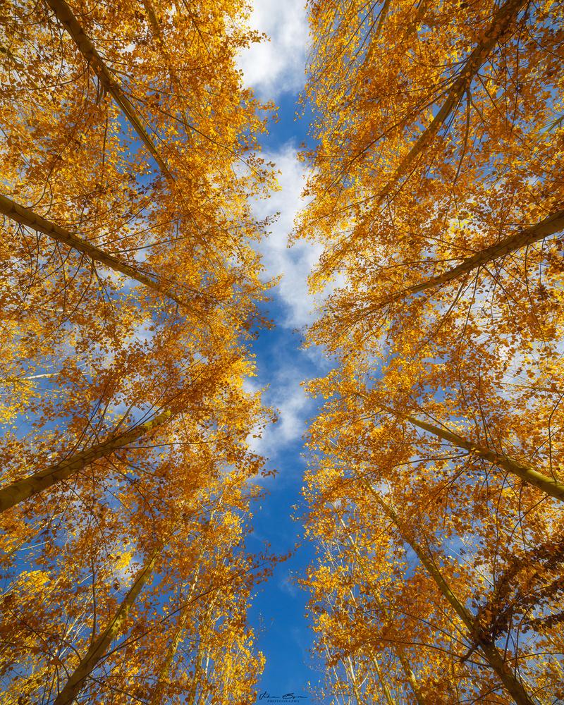 Looking Upwards by John Byrn