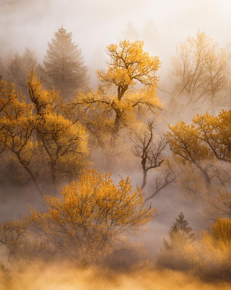 Golden Sunrise by John Byrn