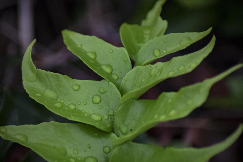 Folha Fresca (Fresh Leaf) by Adelino Fagundes
