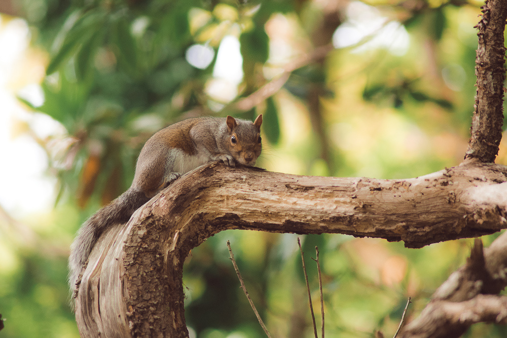 The Best Squirrel Shot by Griffith Bowen