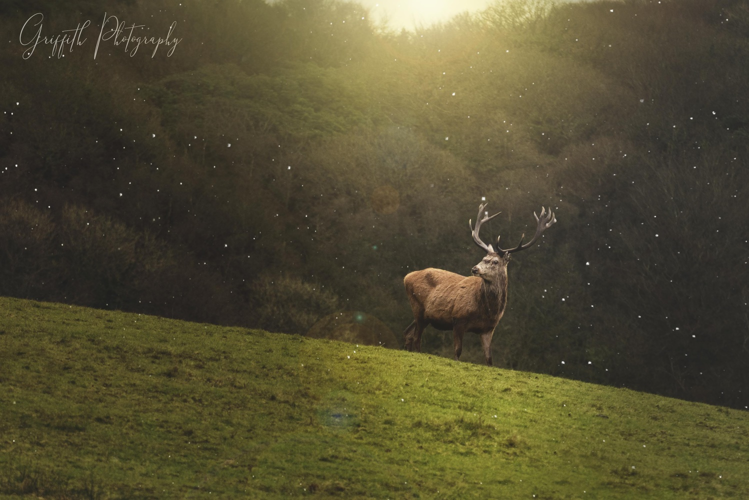 The Deer by Griffith Bowen