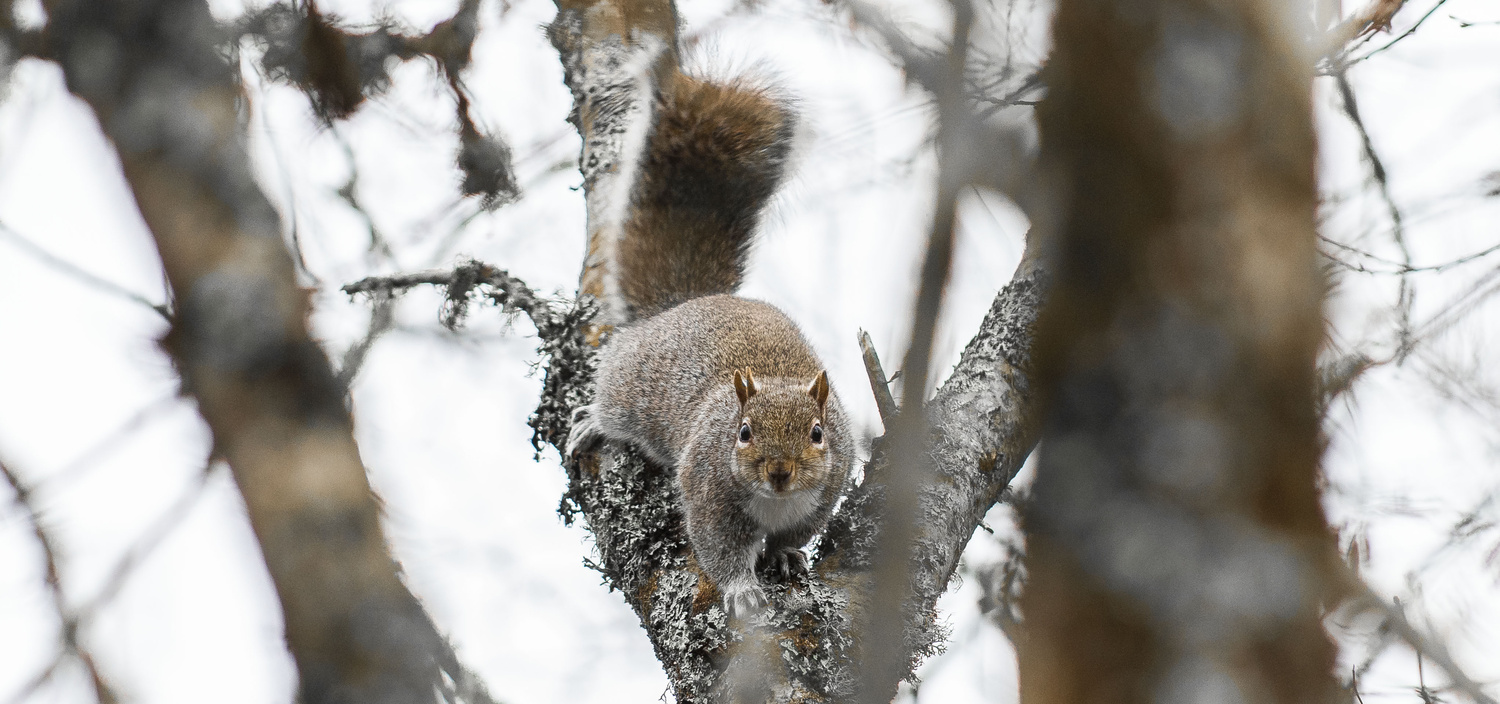 My second favourite Squirrel Shot by Griffith Bowen