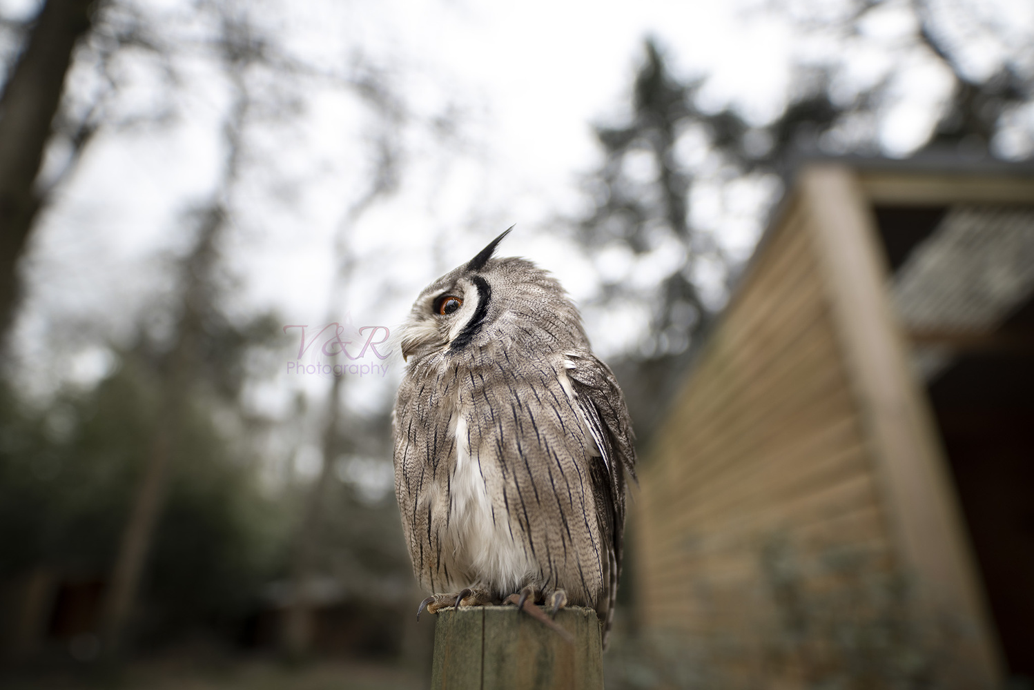 The Small Owl by Griffith Bowen