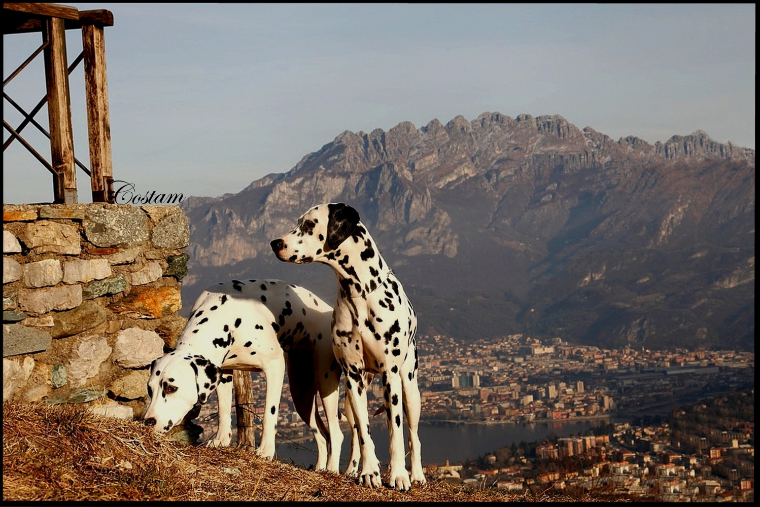 Peggy and Pongo and the Resegone's mount by Tamara Barzagli