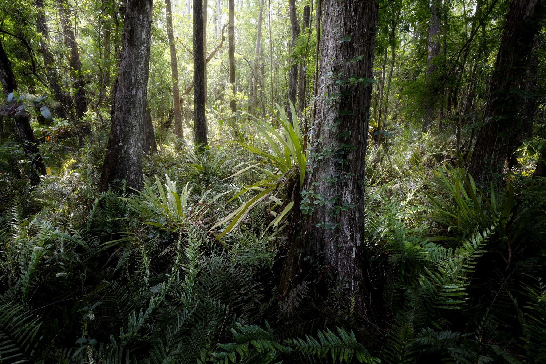 Everglades Forest by Jeremy Leder