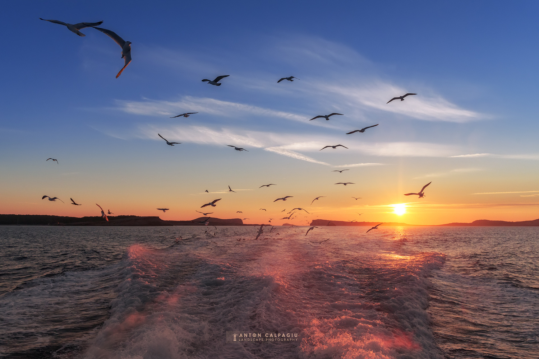 Returning at sunset by Anton Calpagiu