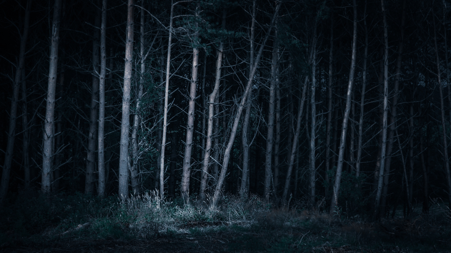 Dark Forrest by Keith Newman