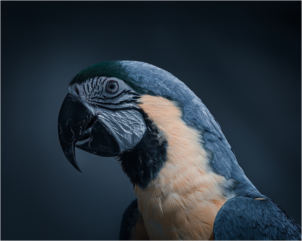 Parrott by Keith Newman