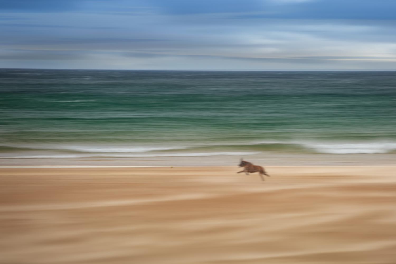 Fetch boy by Keith Newman