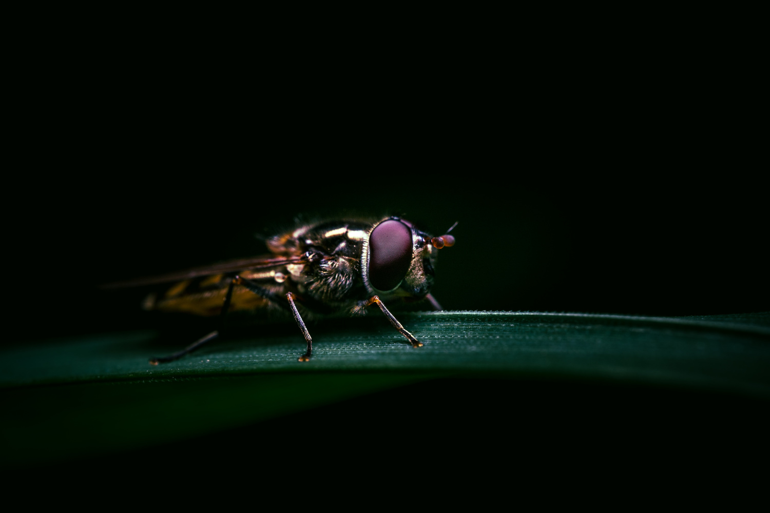 Fly in the spotlight by Vincent Langen