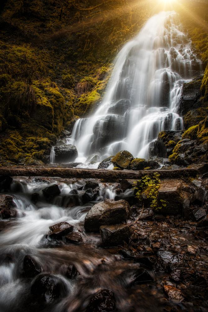 Magical fairy land by Nick Wiltgen