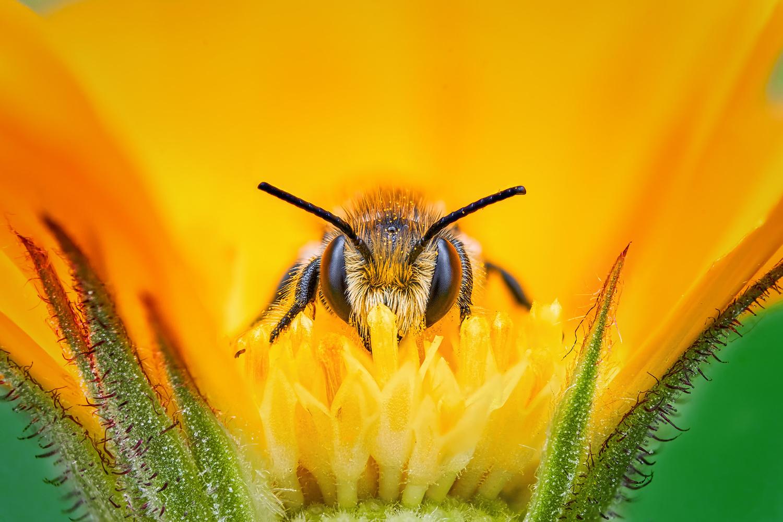 Pollen bath by Pierre Anquet