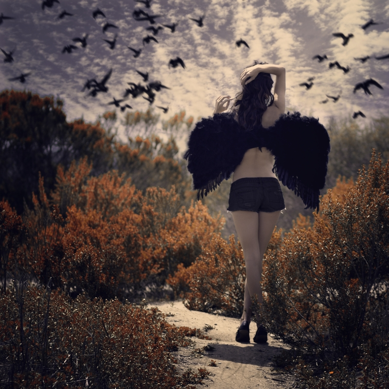 .winged. by Jon Sollee