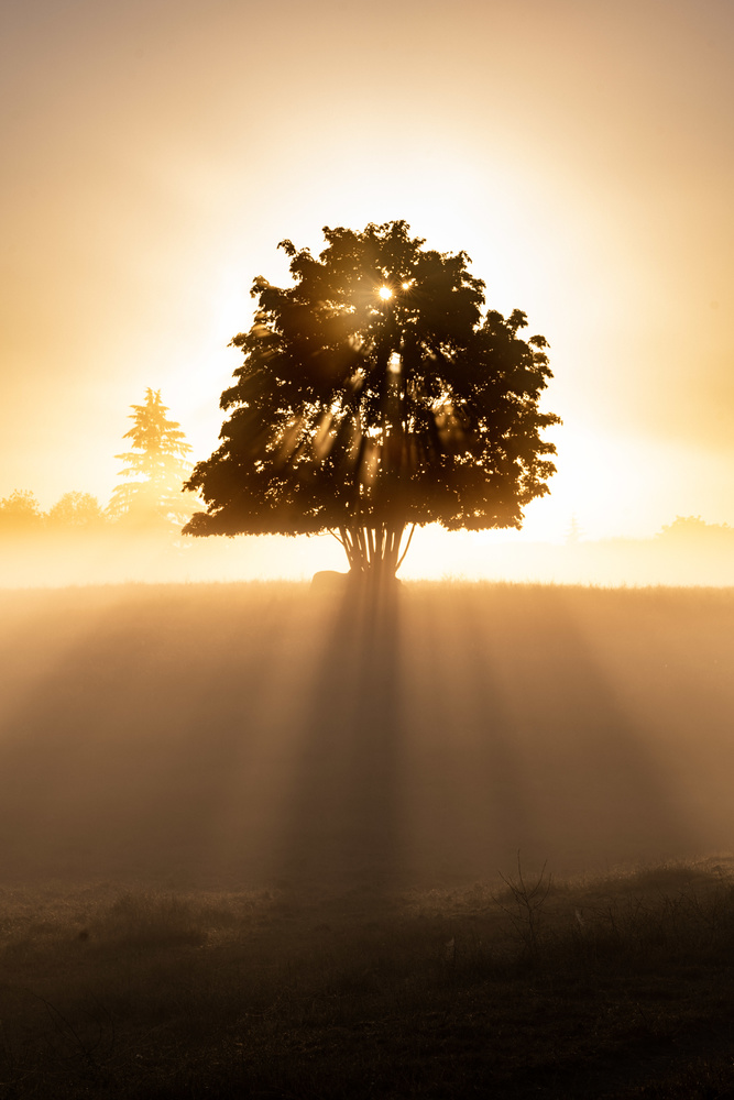 Tree Rays by Christopher Doelman
