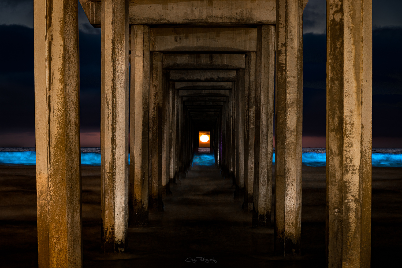 Blue Waved Scrippshenge by Creigh McIntyre