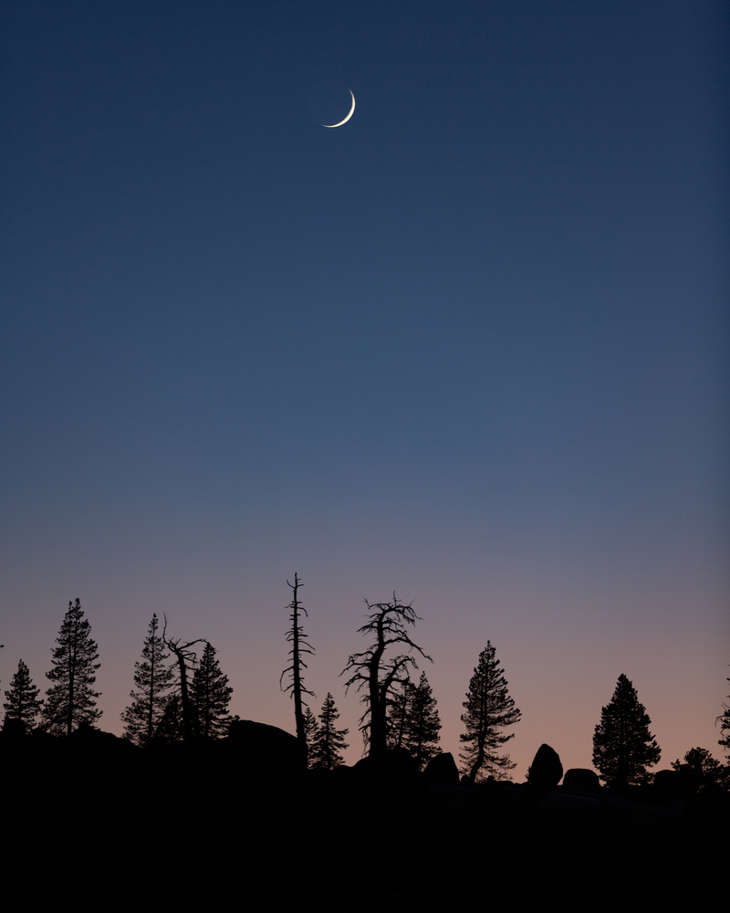 Moonset over treeline by Grant Henninger