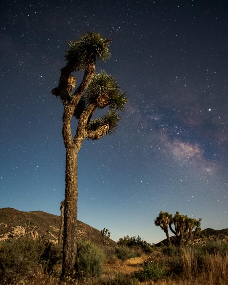 Joshua Tree and Milky Way by Grant Henninger