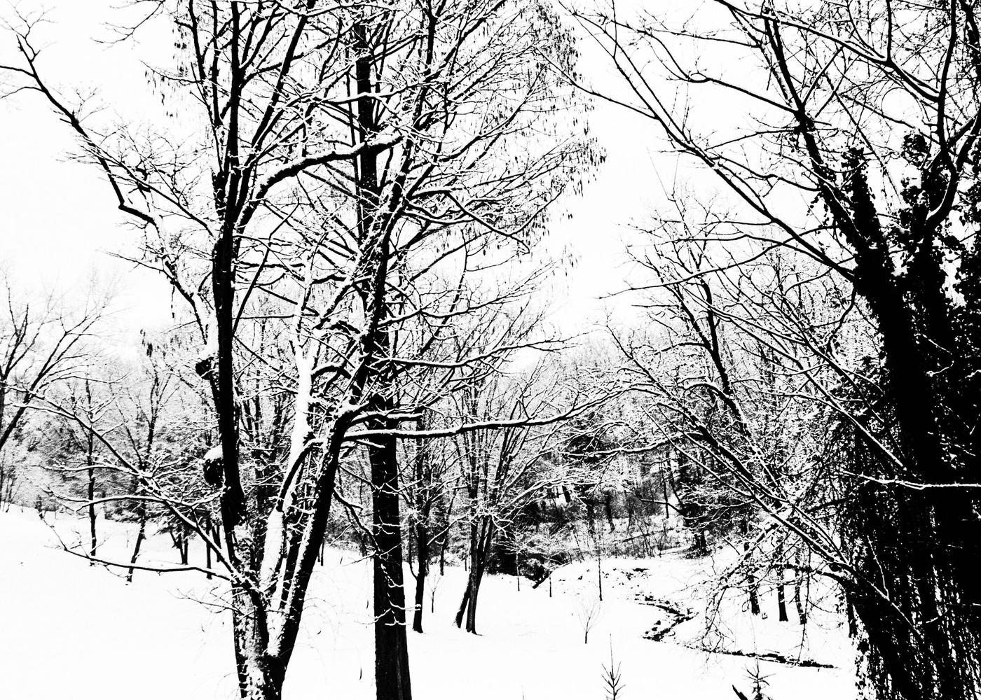 Snowy Day #2 by David Senoff