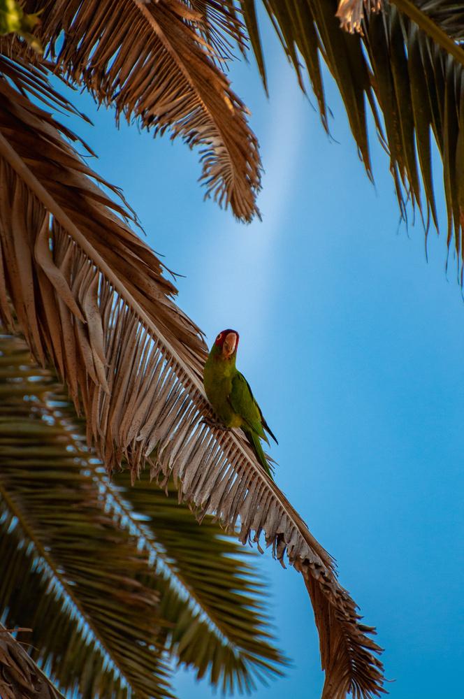 OB Parrot by Josh Utley