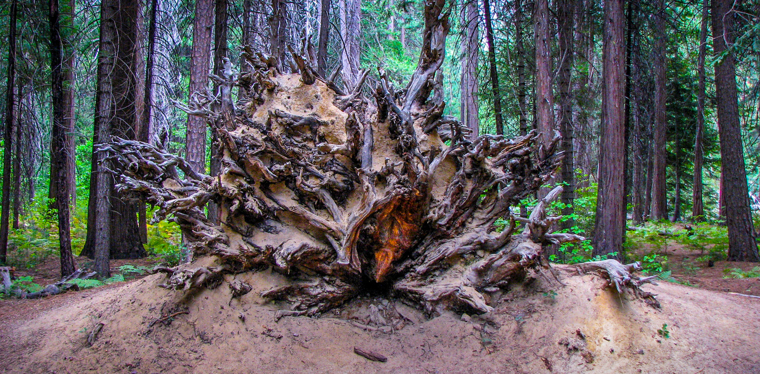Roots by Josh Utley