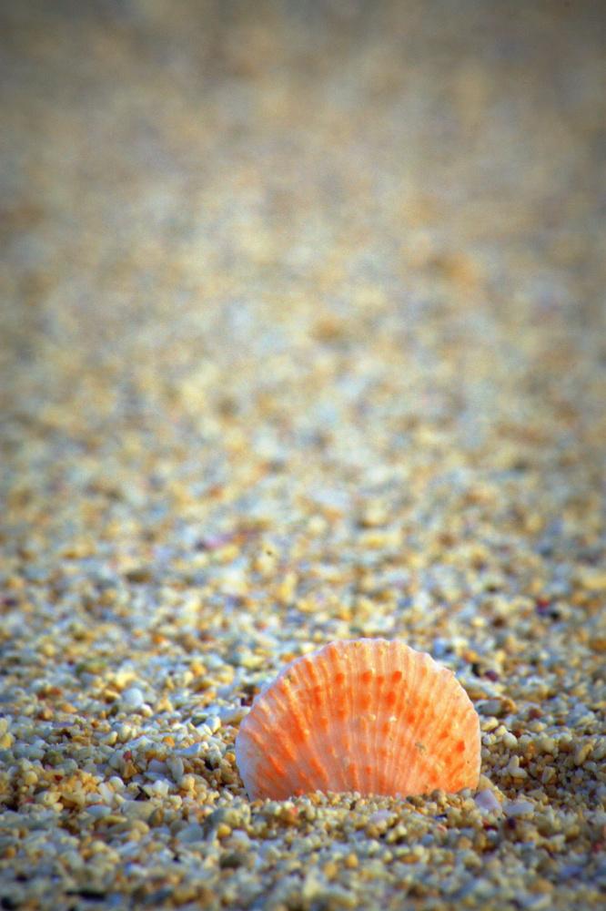 Shell on the beach by Shaun Botha