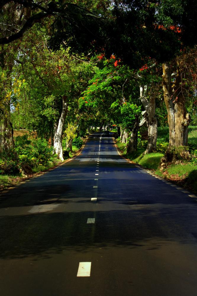 Road to the Beach by Shaun Botha