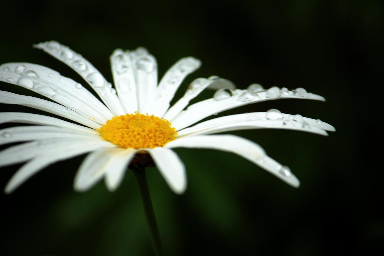 White flower Water by Shaun Botha