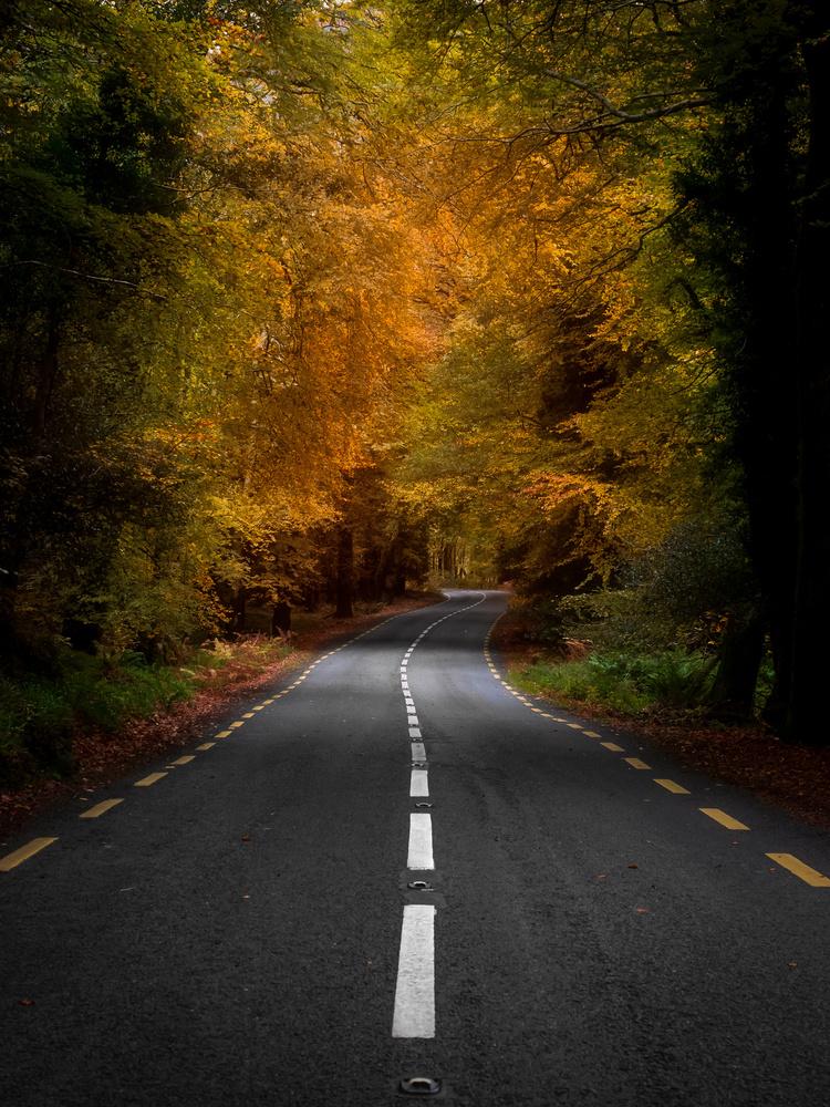 Autumn Road by Sean O' Riordan