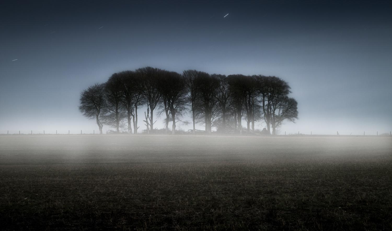 Moonlit Trees by Sean O' Riordan