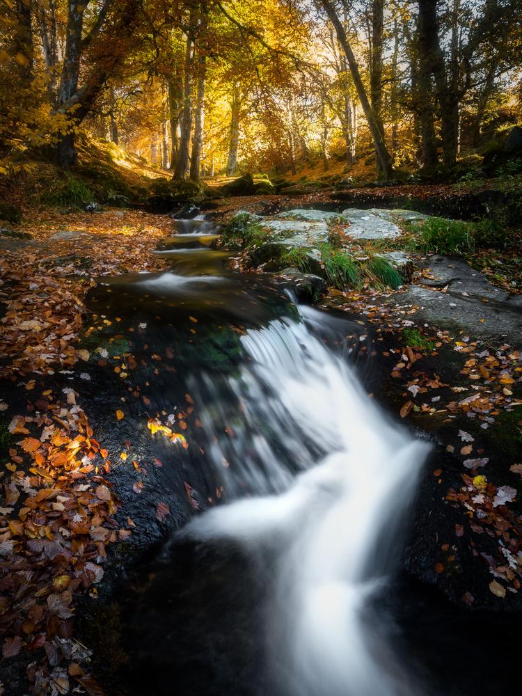 Autumn Color by Sean O' Riordan