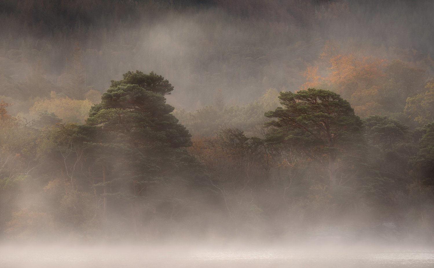 Pines in the Mist by Sean O' Riordan