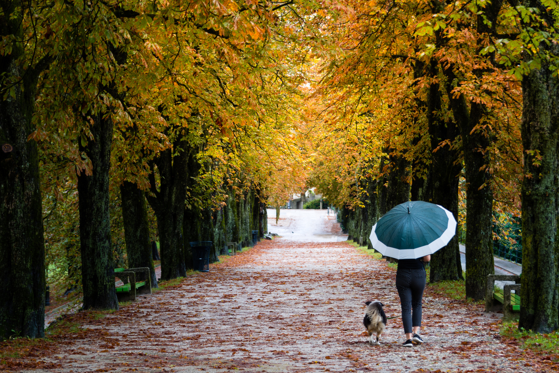 Rainy day by Mato Novak