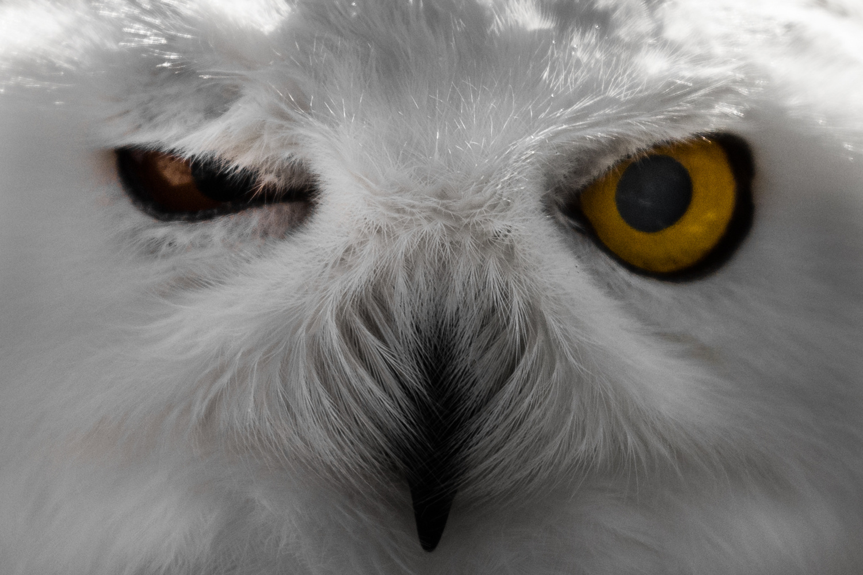 Angry bird by Mato Novak