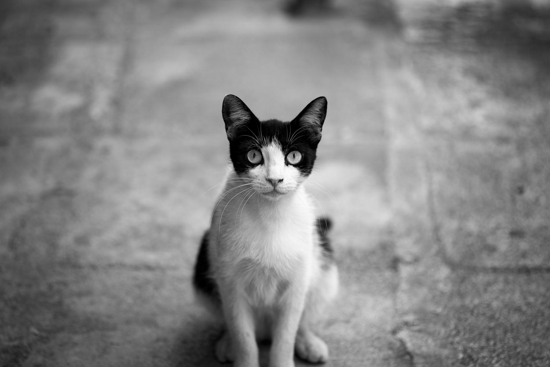 El Gato by John Xenos