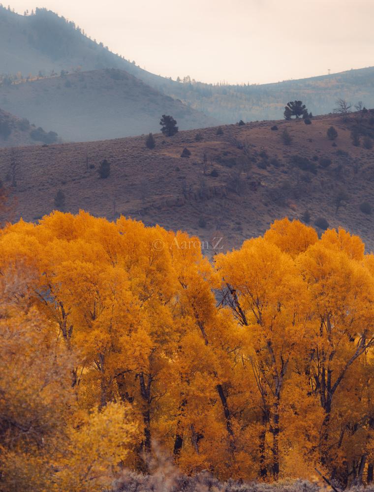 Fall foliage in Smoke by Aaron Aaron