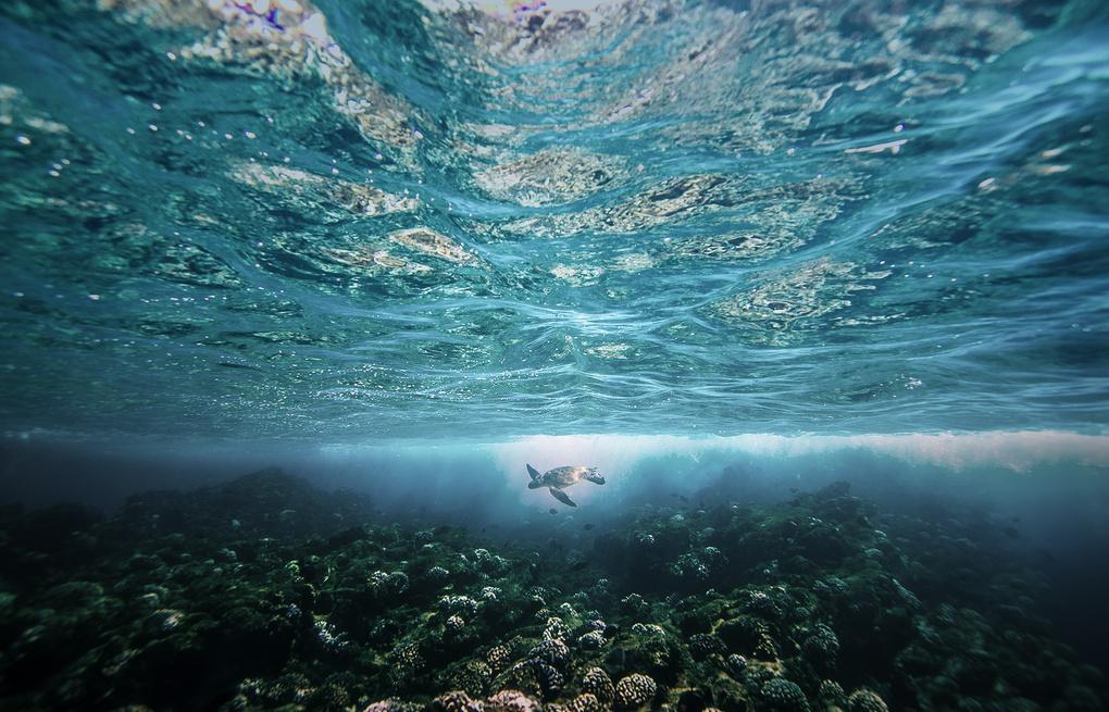 Turtle Abyss by Rick Denham